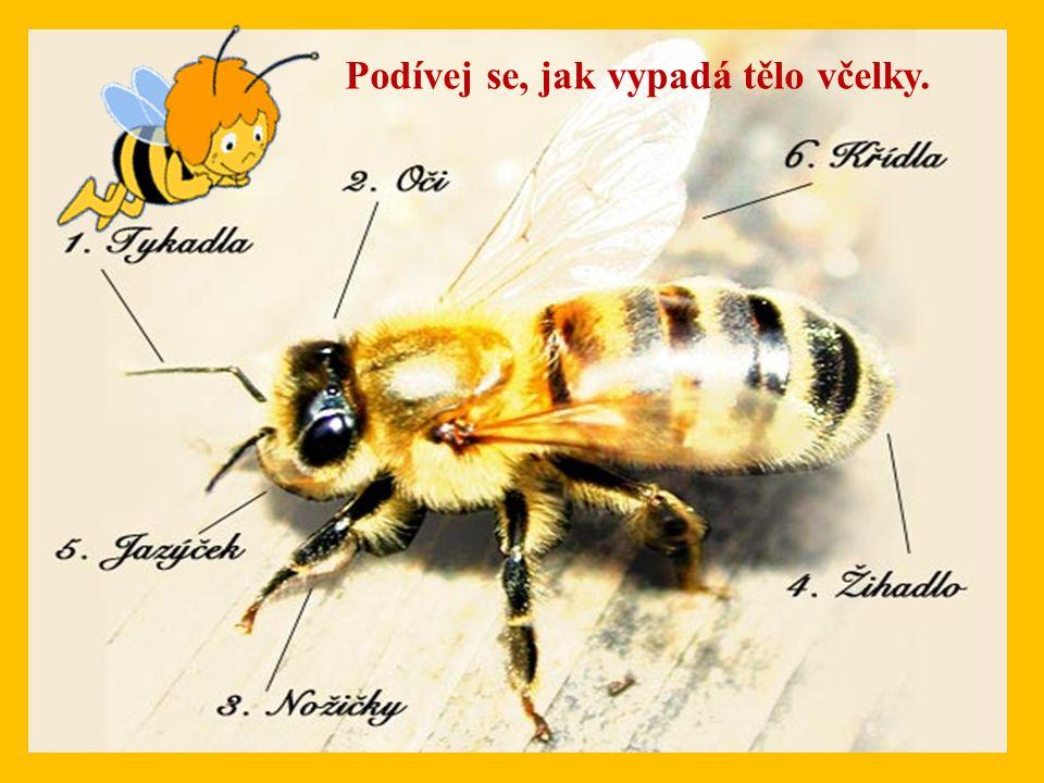 Podívej se, jak vypadá tělo včelky.