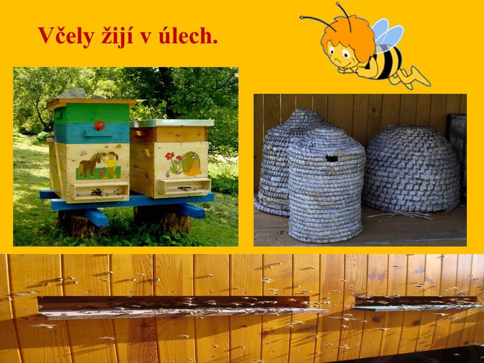Včely žijí v úlech.