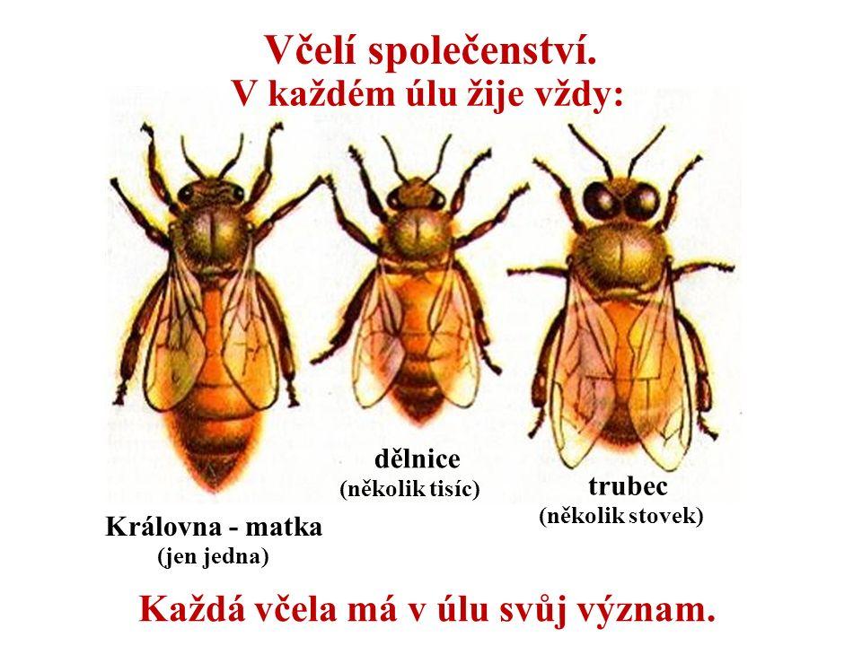 Každá včela má v úlu svůj význam.
