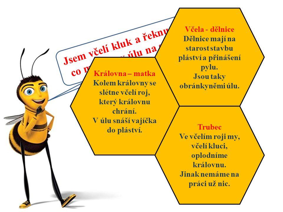 Jsem včelí kluk a řeknu vám, co má kdo v úlu na starosti.