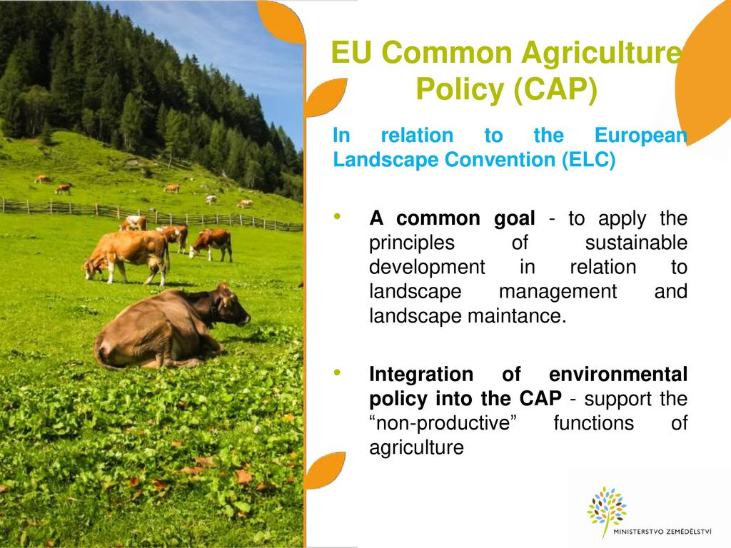 common agricultural policy history