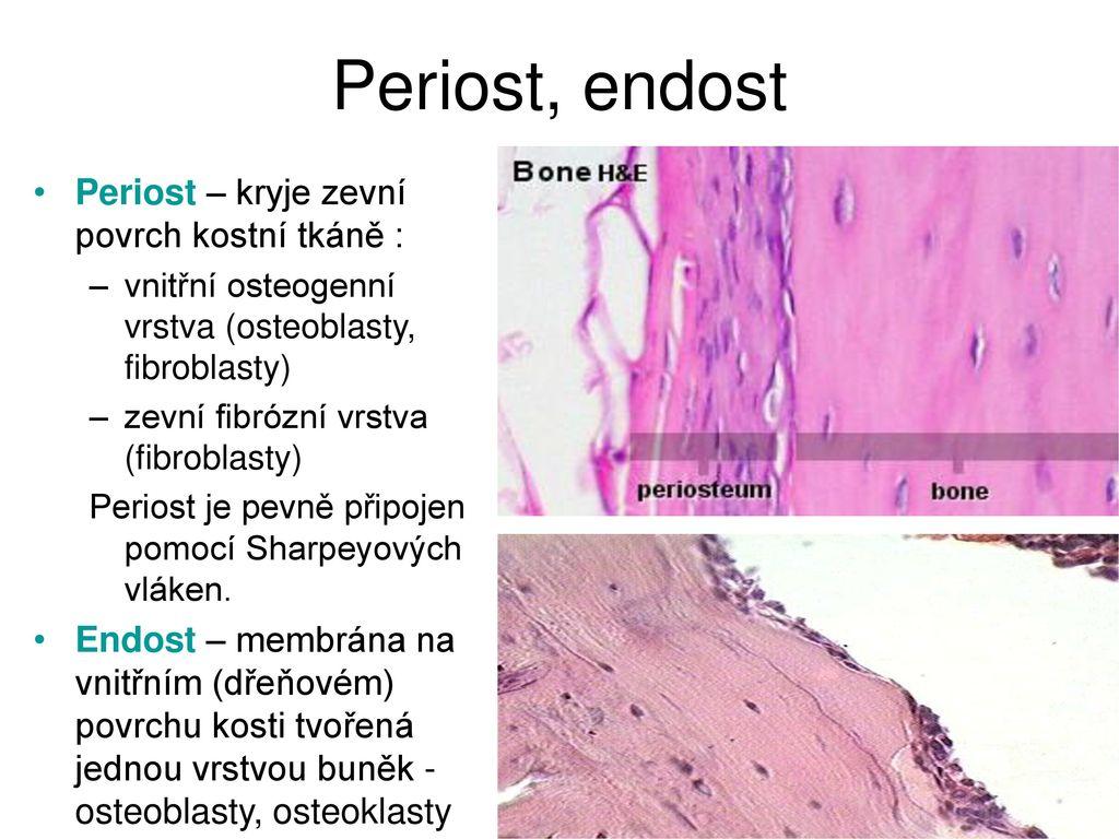 Erfreut Funktion Des Periosts Fotos - Menschliche Anatomie Bilder ...