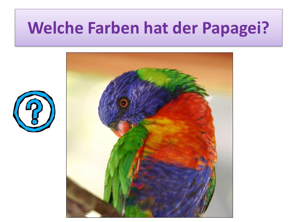 Welche Farben hat der Papagei