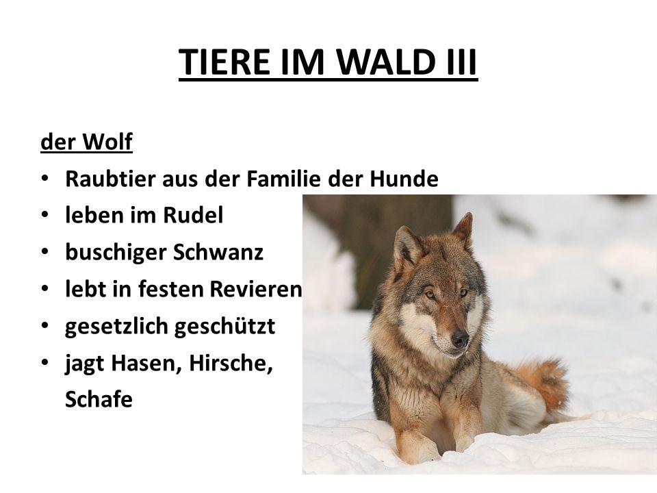 TIERE IM WALD III der Wolf Raubtier aus der Familie der Hunde