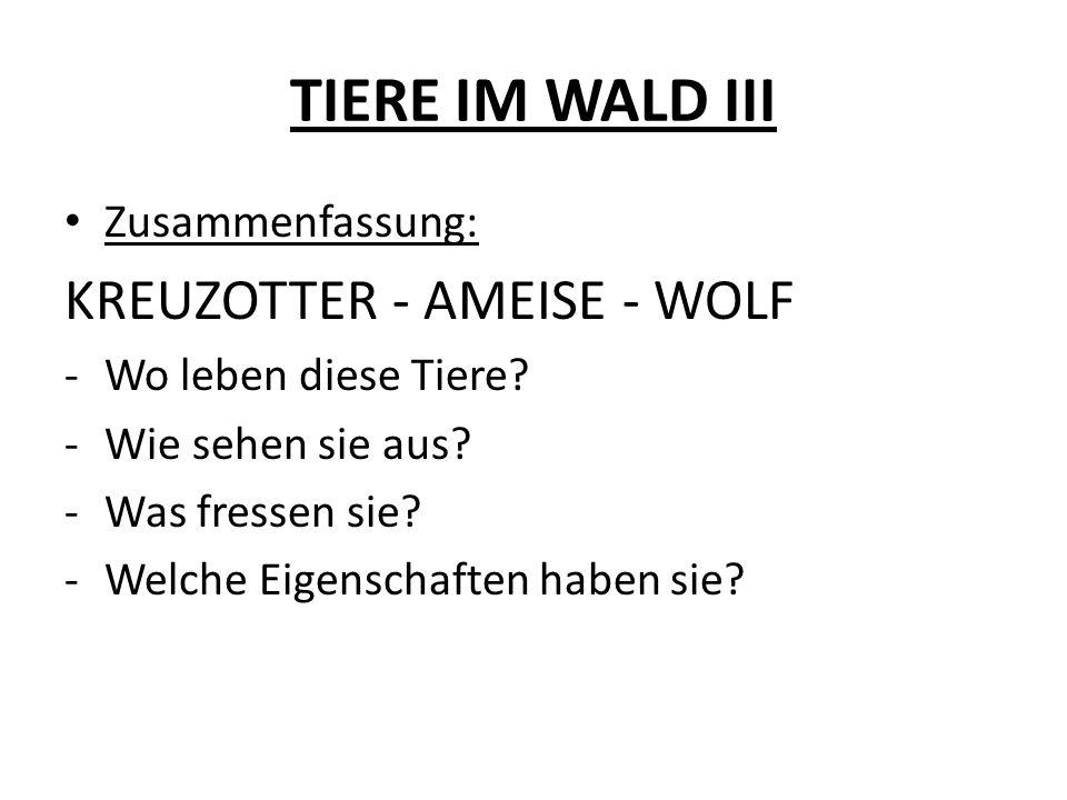TIERE IM WALD III KREUZOTTER - AMEISE - WOLF Zusammenfassung: