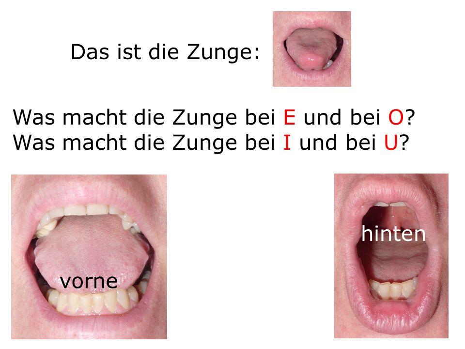 Das ist die Zunge: Was macht die Zunge bei E und bei O Was macht die Zunge bei I und bei U hinten.