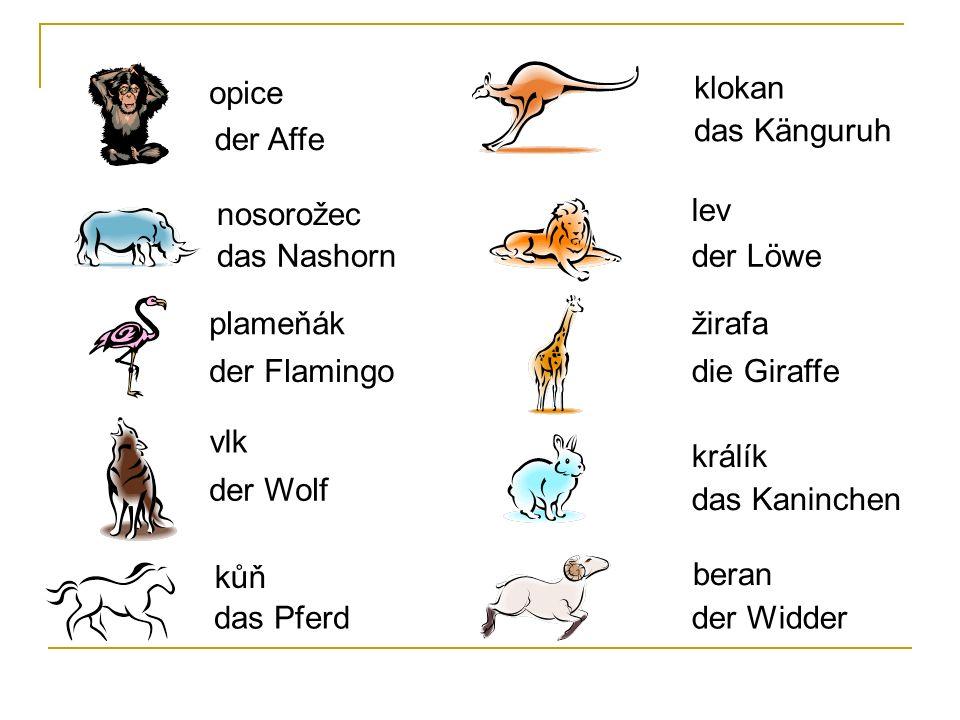 opice klokan. das Känguruh. der Affe. nosorožec. lev. das Nashorn. der Löwe. plameňák. žirafa.