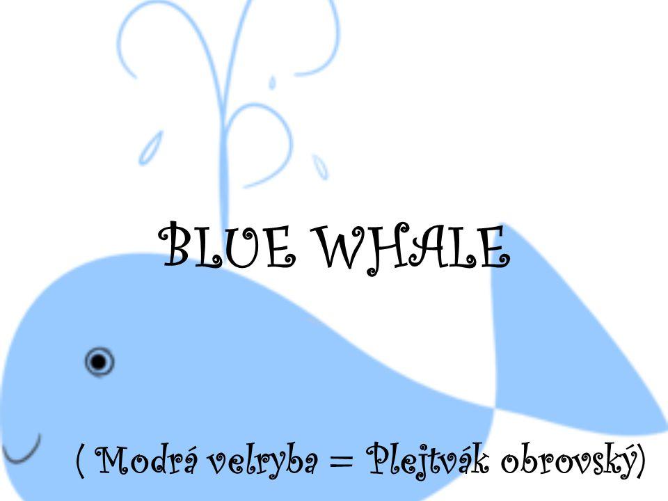 ( Modrá velryba = Plejtvák obrovský)