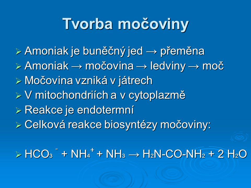 Tvorba močoviny Amoniak je buněčný jed → přeměna