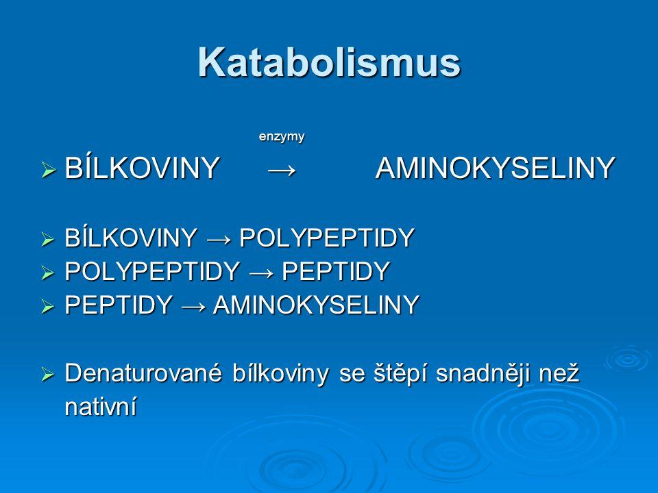 Katabolismus BÍLKOVINY → AMINOKYSELINY enzymy BÍLKOVINY → POLYPEPTIDY