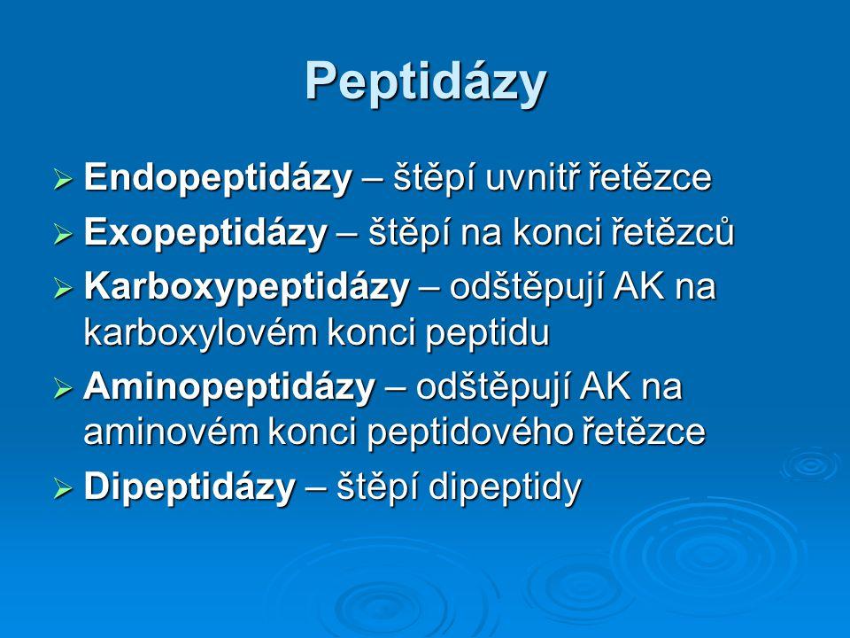 Peptidázy Endopeptidázy – štěpí uvnitř řetězce