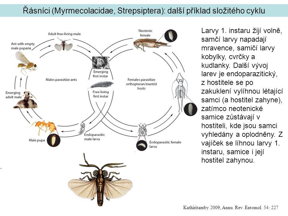 Řásníci (Myrmecolacidae, Strepsiptera): další příklad složitého cyklu