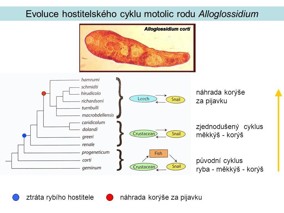 Evoluce hostitelského cyklu motolic rodu Alloglossidium