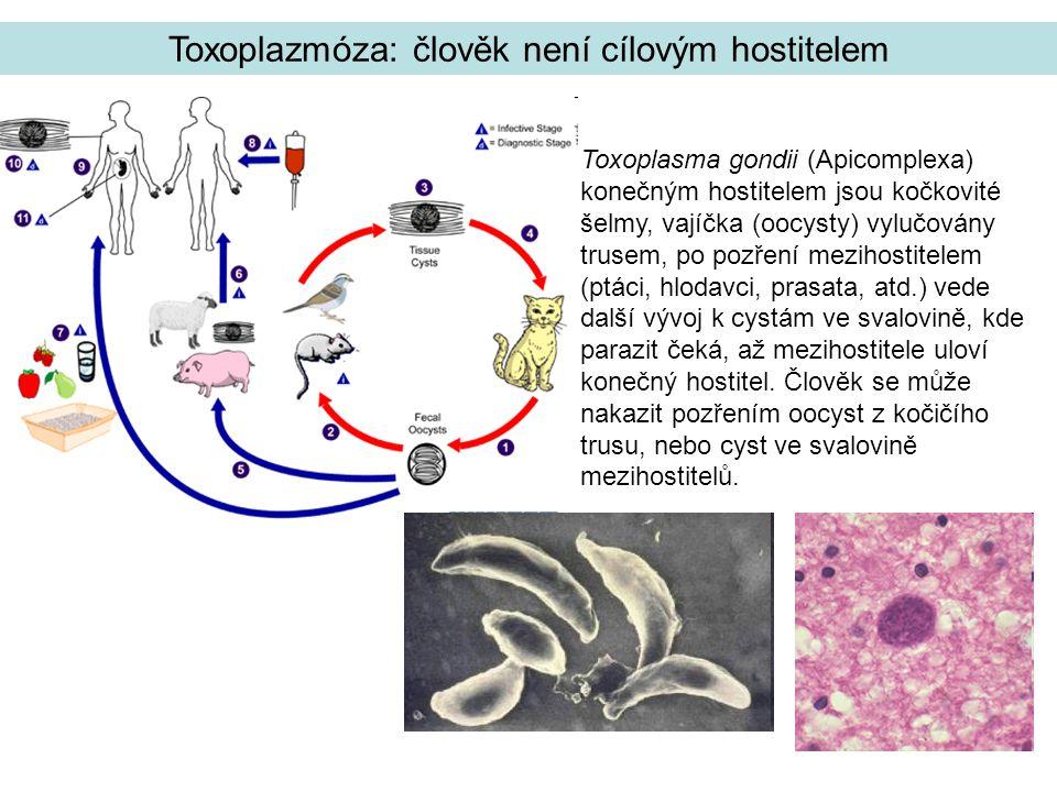 Toxoplazmóza: člověk není cílovým hostitelem