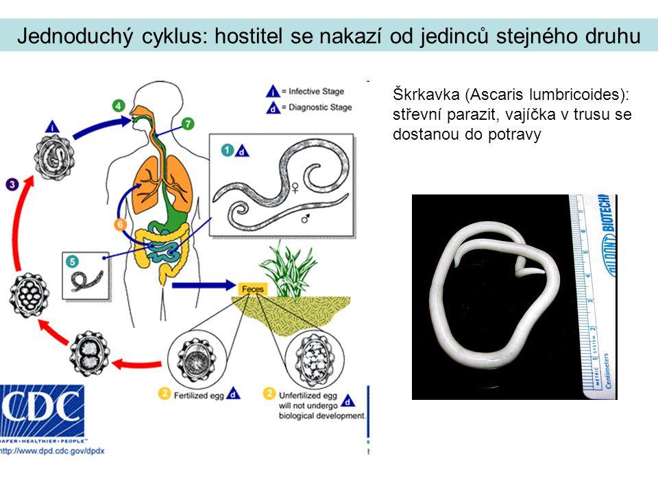 Jednoduchý cyklus: hostitel se nakazí od jedinců stejného druhu