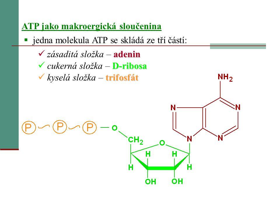 ATP jako makroergická sloučenina
