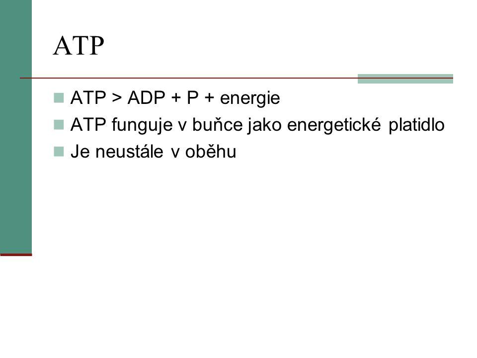 ATP ATP > ADP + P + energie