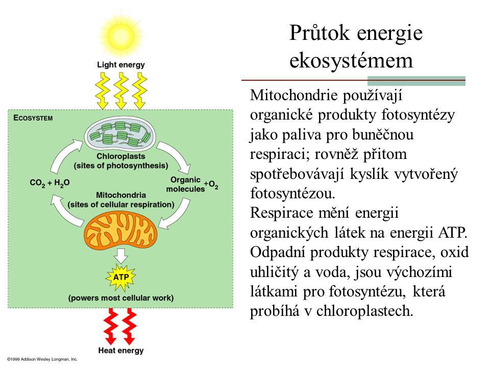 Průtok energie ekosystémem