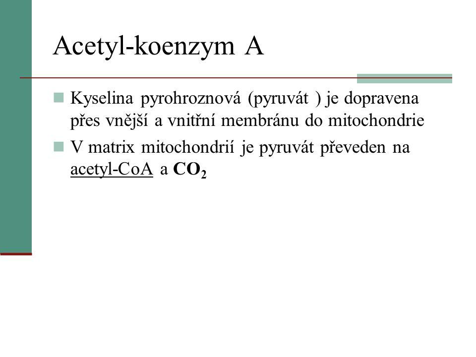 Acetyl-koenzym A Kyselina pyrohroznová (pyruvát ) je dopravena přes vnější a vnitřní membránu do mitochondrie.