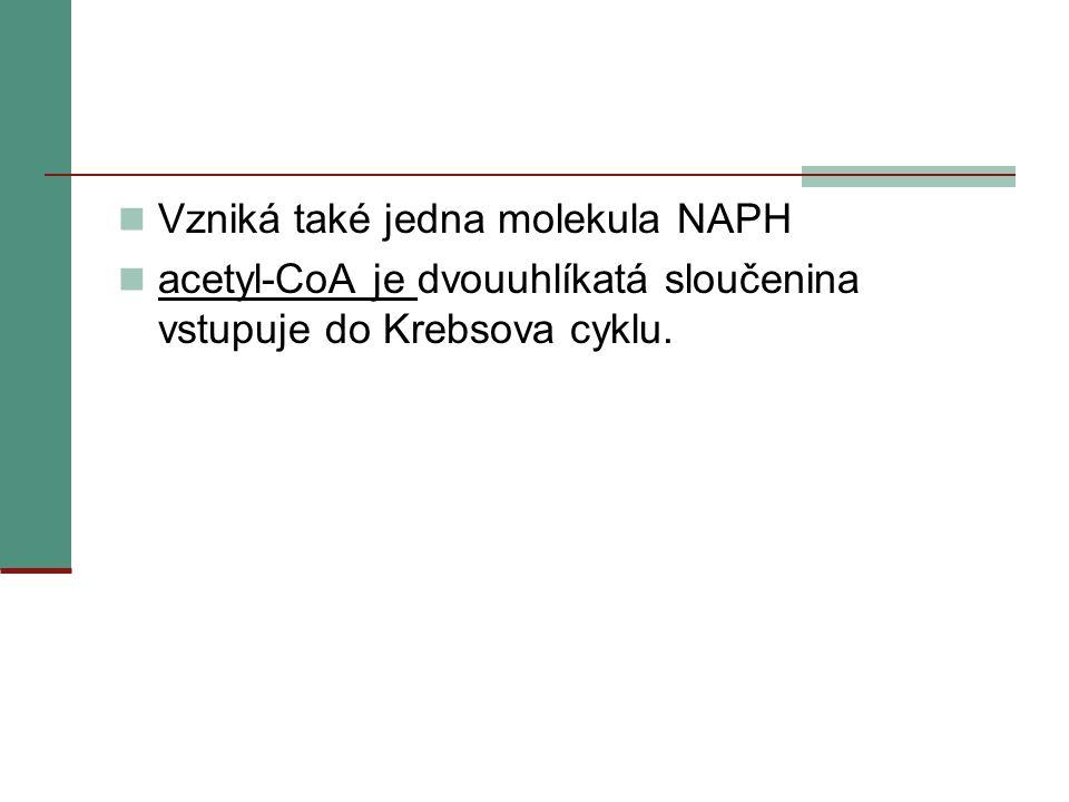 Vzniká také jedna molekula NAPH