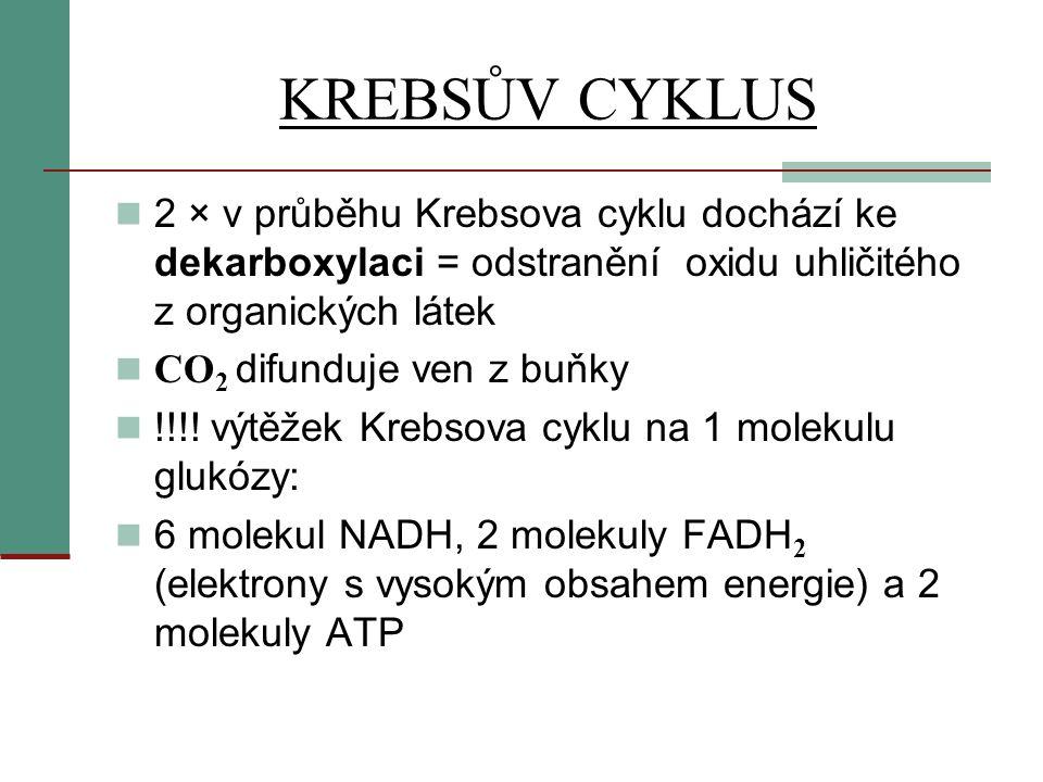 KREBSŮV CYKLUS 2 × v průběhu Krebsova cyklu dochází ke dekarboxylaci = odstranění oxidu uhličitého z organických látek.