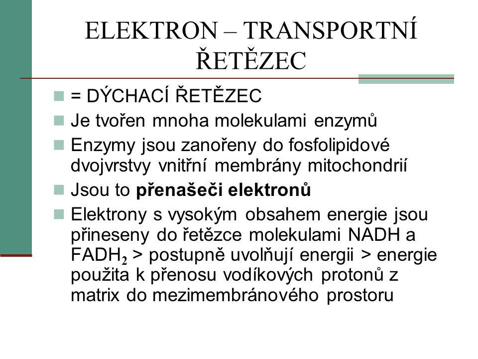 ELEKTRON – TRANSPORTNÍ ŘETĚZEC