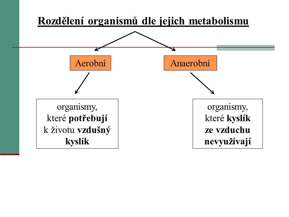 Rozdělení organismů dle jejich metabolismu