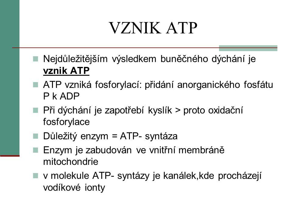 VZNIK ATP Nejdůležitějším výsledkem buněčného dýchání je vznik ATP