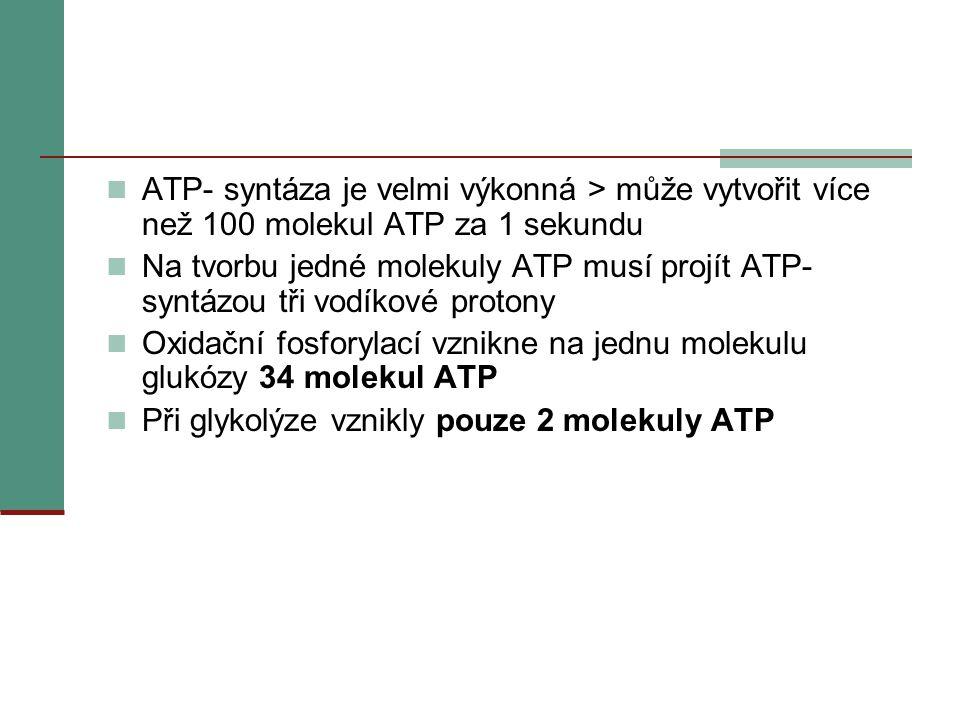 ATP- syntáza je velmi výkonná > může vytvořit více než 100 molekul ATP za 1 sekundu