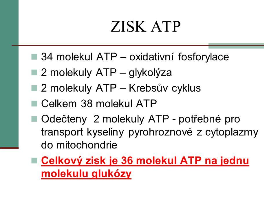 ZISK ATP 34 molekul ATP – oxidativní fosforylace