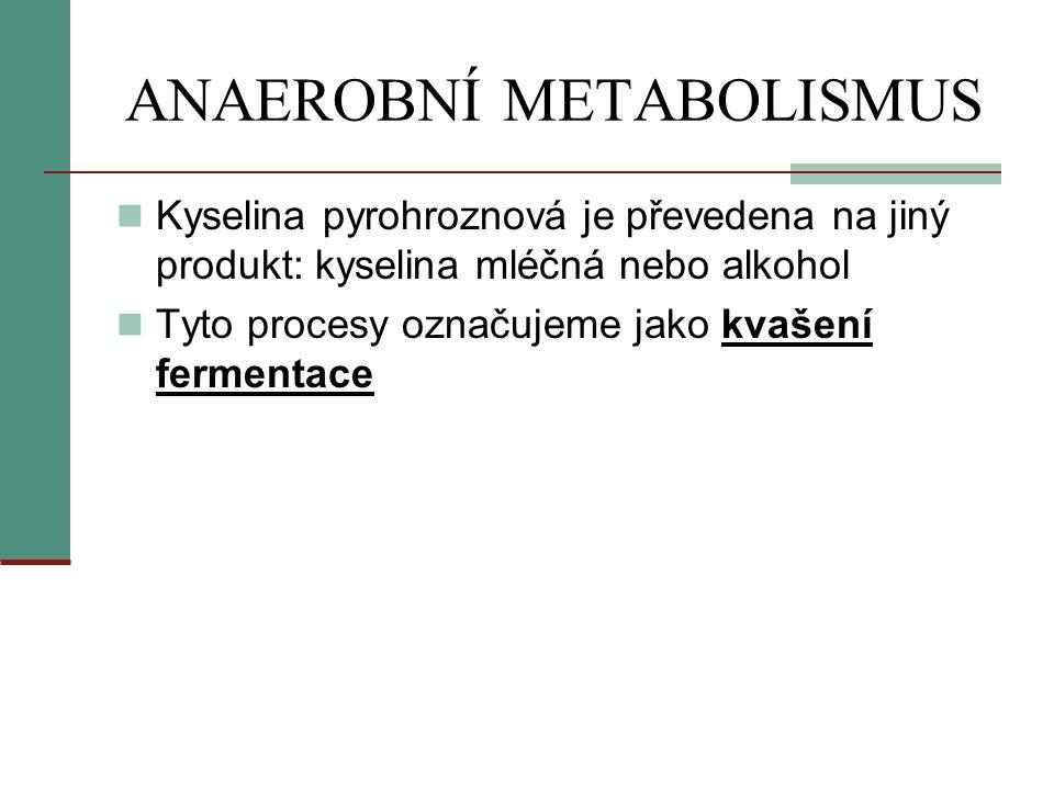 ANAEROBNÍ METABOLISMUS