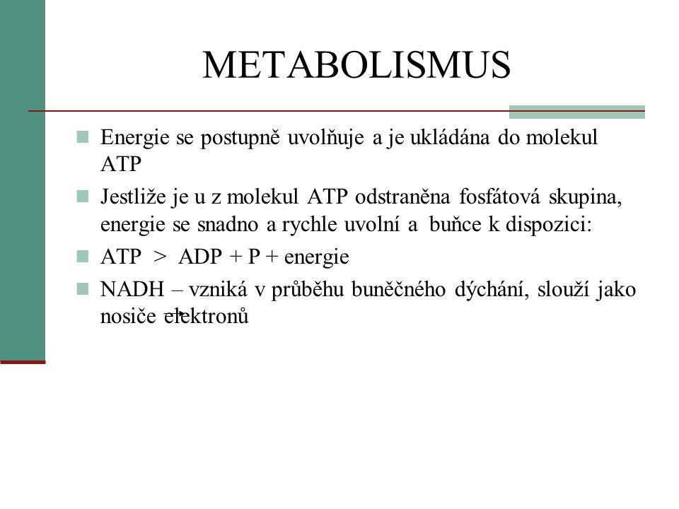 METABOLISMUS Energie se postupně uvolňuje a je ukládána do molekul ATP