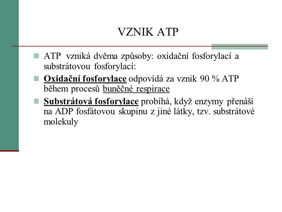 VZNIK ATP ATP vzniká dvěma způsoby: oxidační fosforylací a substrátovou fosforylací: