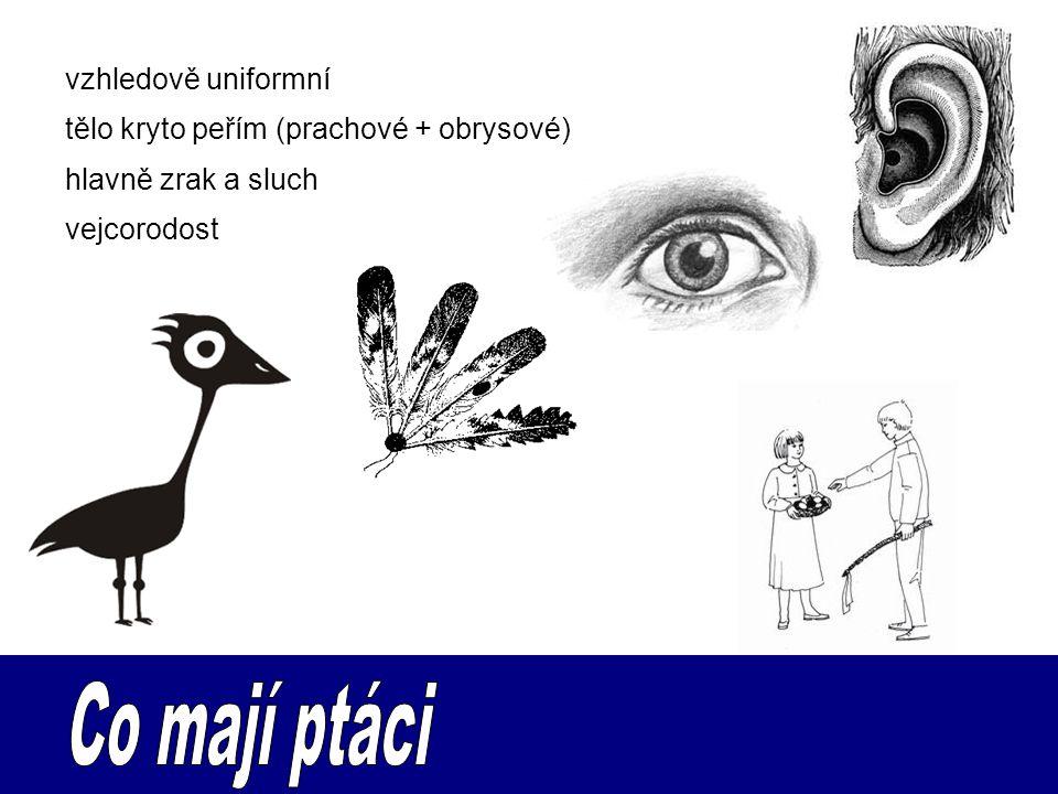 Co mají ptáci vzhledově uniformní