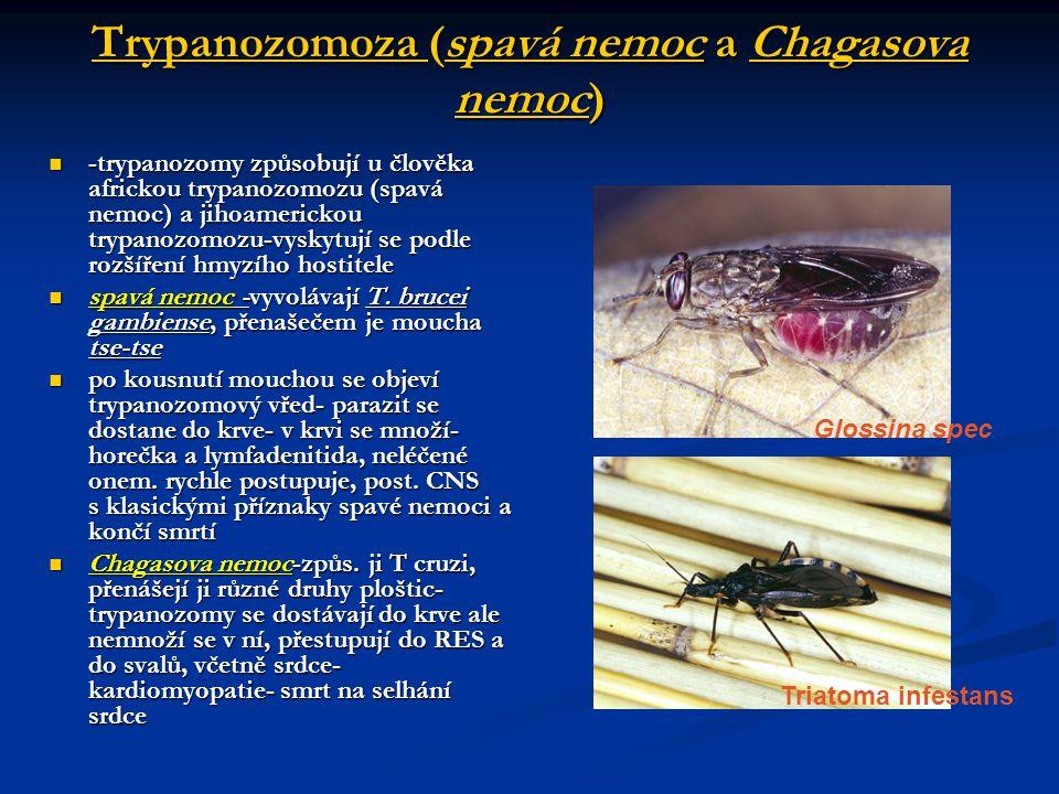 Trypanozomoza (spavá nemoc a Chagasova nemoc)