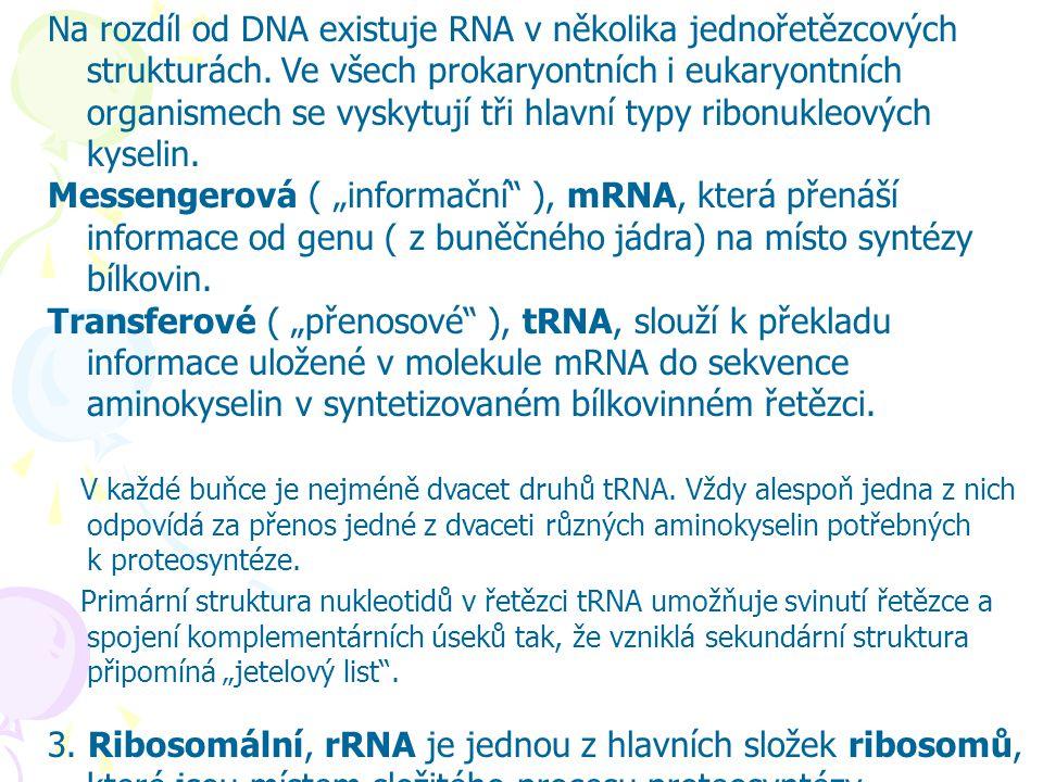 Na rozdíl od DNA existuje RNA v několika jednořetězcových strukturách