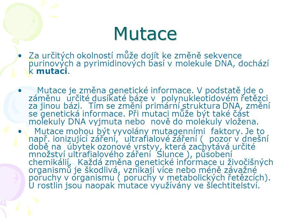 Mutace Za určitých okolností může dojít ke změně sekvence purinových a pyrimidinových basí v molekule DNA, dochází k mutaci.