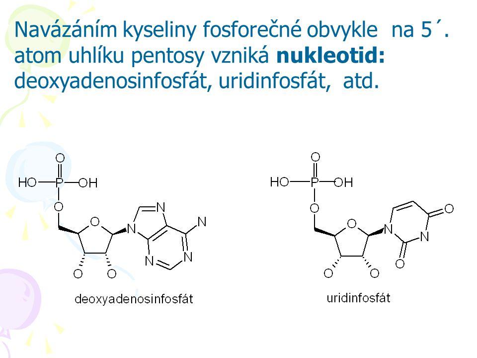 Navázáním kyseliny fosforečné obvykle na 5´