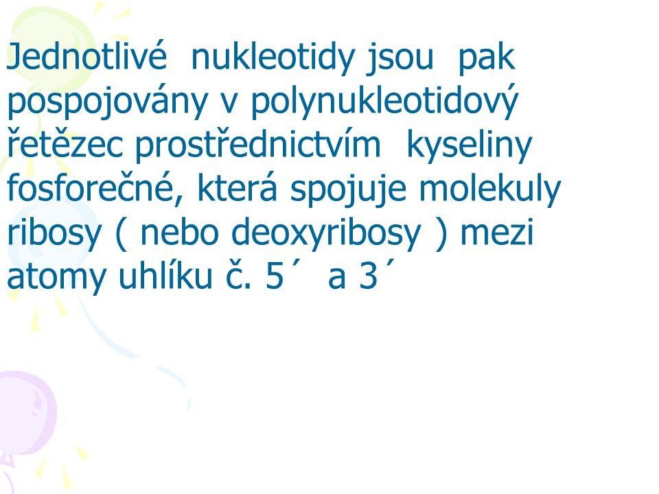 Jednotlivé nukleotidy jsou pak pospojovány v polynukleotidový řetězec prostřednictvím kyseliny fosforečné, která spojuje molekuly ribosy ( nebo deoxyribosy ) mezi atomy uhlíku č.