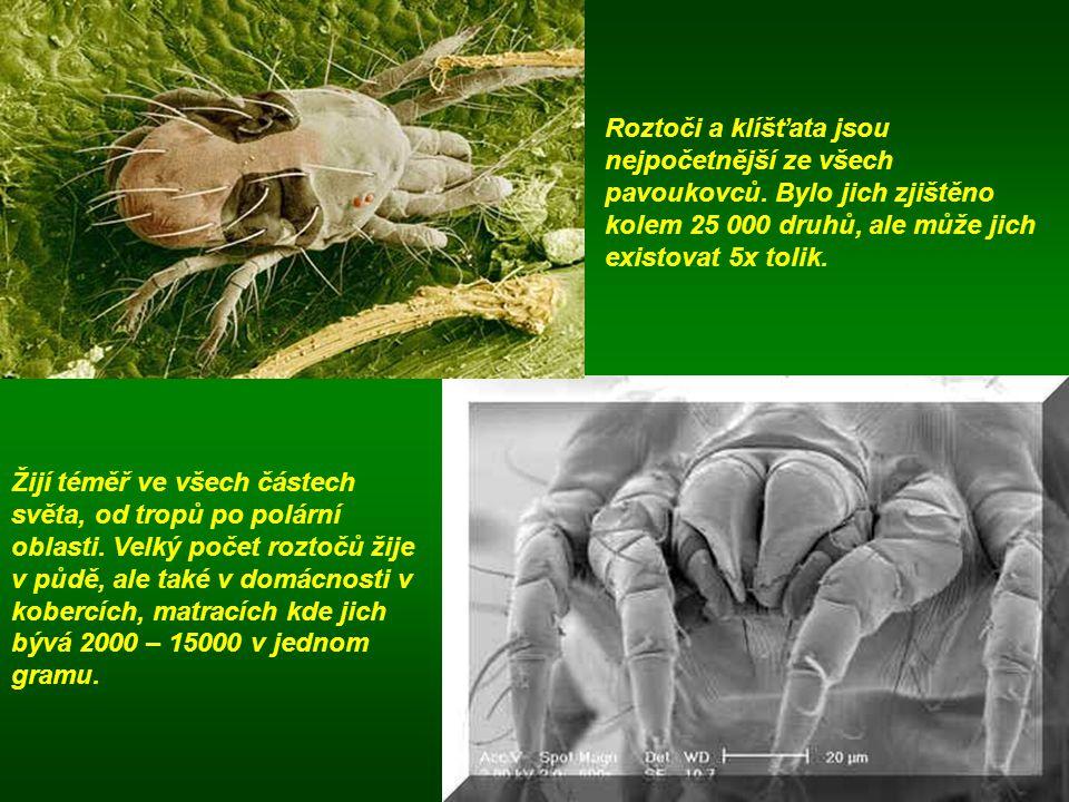 Roztoči a klíšťata jsou nejpočetnější ze všech pavoukovců