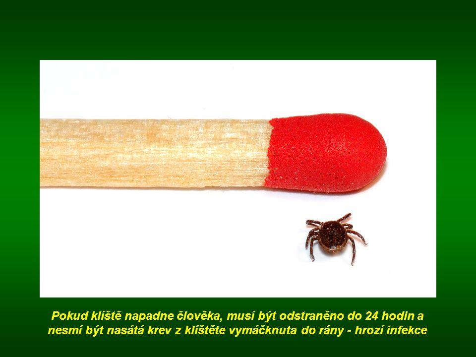 Pokud klíště napadne člověka, musí být odstraněno do 24 hodin a nesmí být nasátá krev z klíštěte vymáčknuta do rány - hrozí infekce