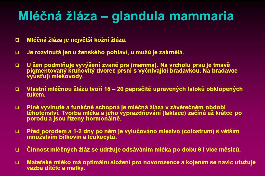Mléčná žláza – glandula mammaria