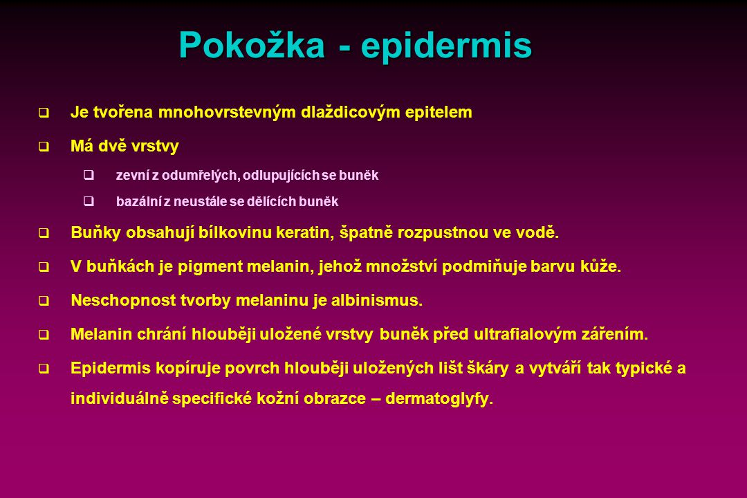 Pokožka - epidermis Text: Reprodukce nálevníků