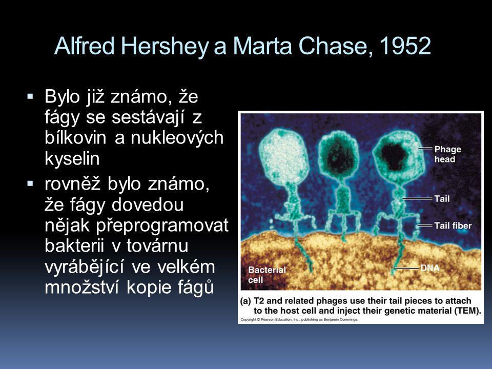 Alfred Hershey a Marta Chase, 1952