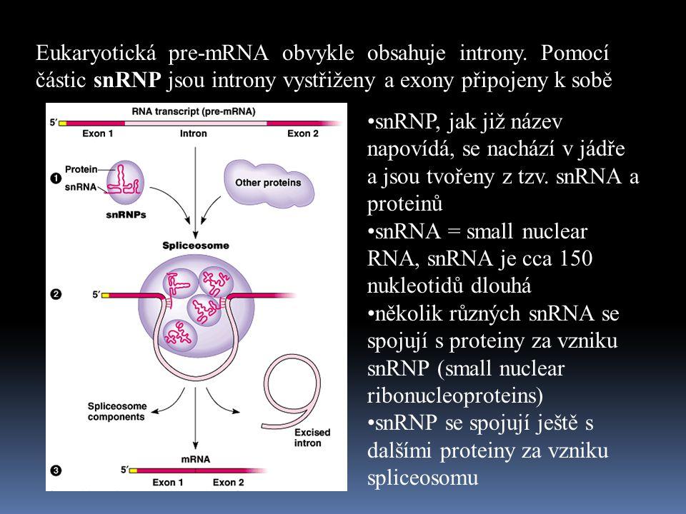 Eukaryotická pre-mRNA obvykle obsahuje introny. Pomocí