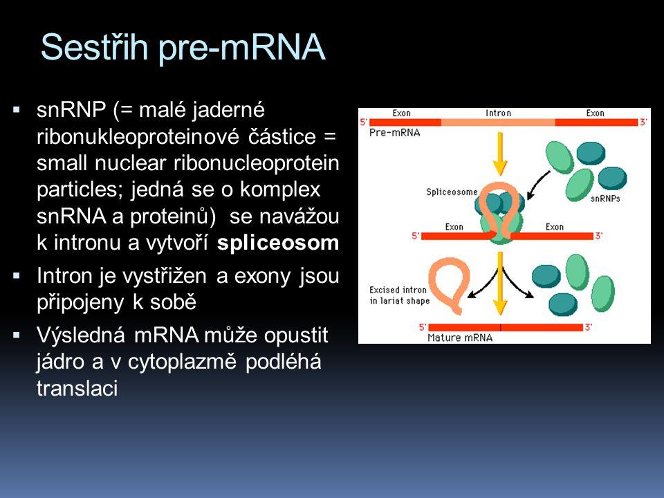Sestřih pre-mRNA
