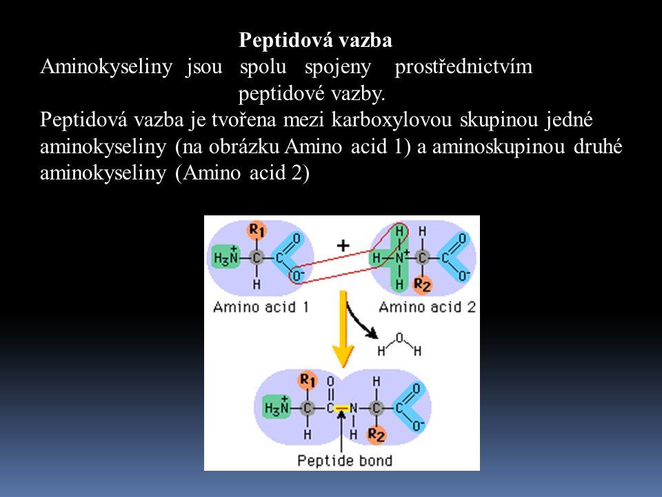 Peptidová vazba Aminokyseliny jsou spolu spojeny prostřednictvím. peptidové vazby.