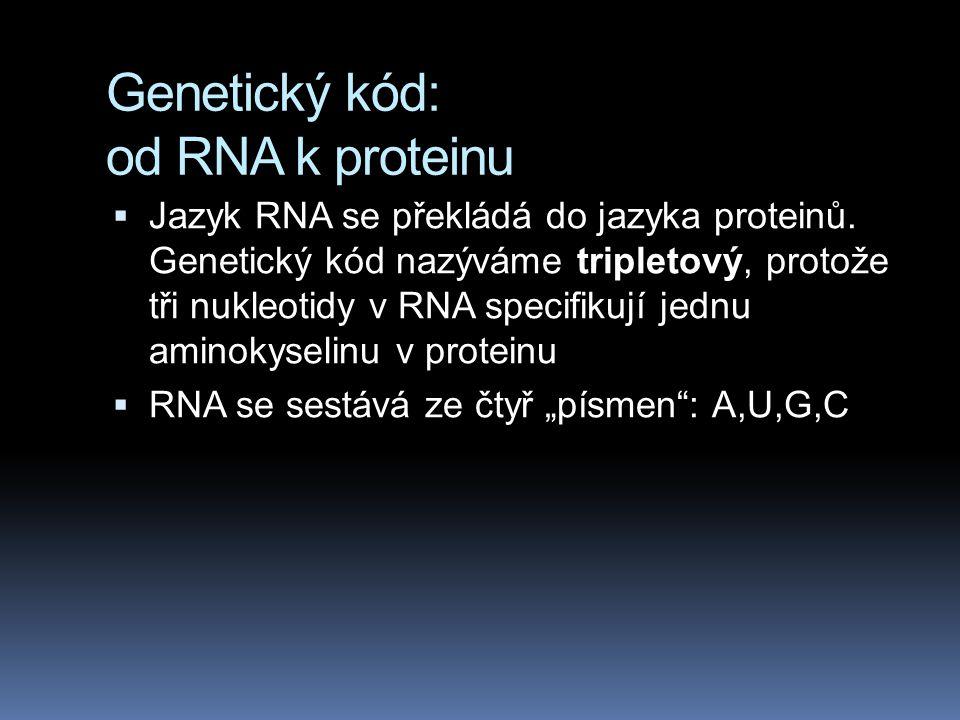 Genetický kód: od RNA k proteinu