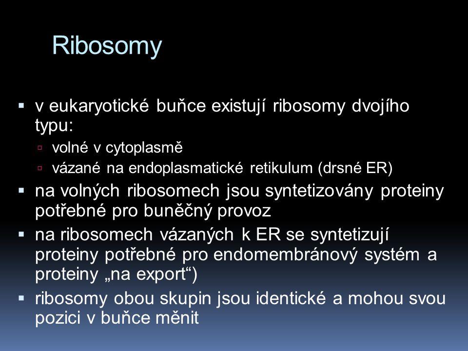 Ribosomy v eukaryotické buňce existují ribosomy dvojího typu:
