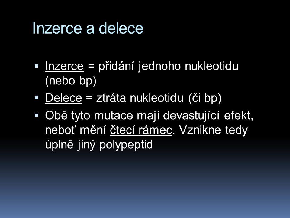 Inzerce a delece Inzerce = přidání jednoho nukleotidu (nebo bp)